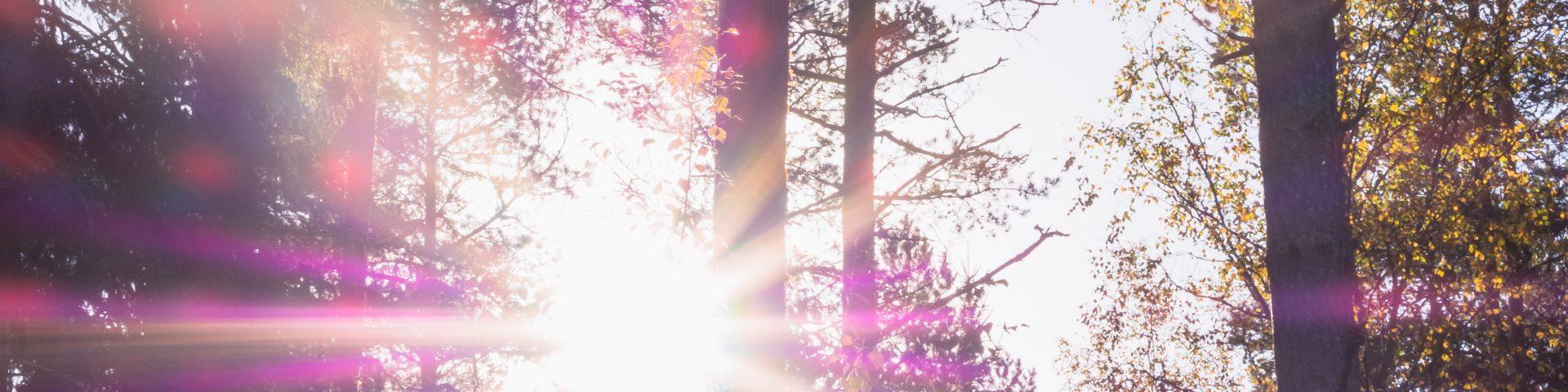 Waldbörse: Wald kaufen